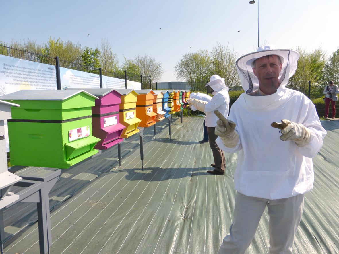 des ruches en ville st quentin mag