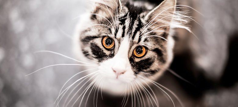 pretty-cat-eyes